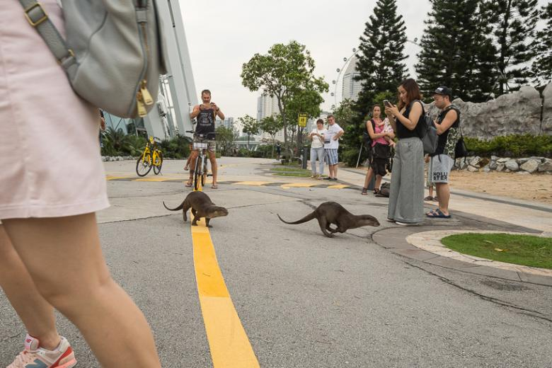 Otters impressing the crowds at Gardens by the Bay.
