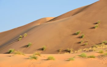 Wallpaper: Sand dunes in the desert