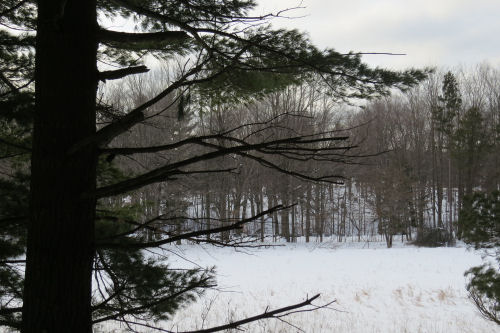 snowy landscape through a pine