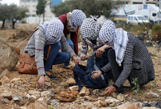 wanita palestine memungut batu sebagai senjata
