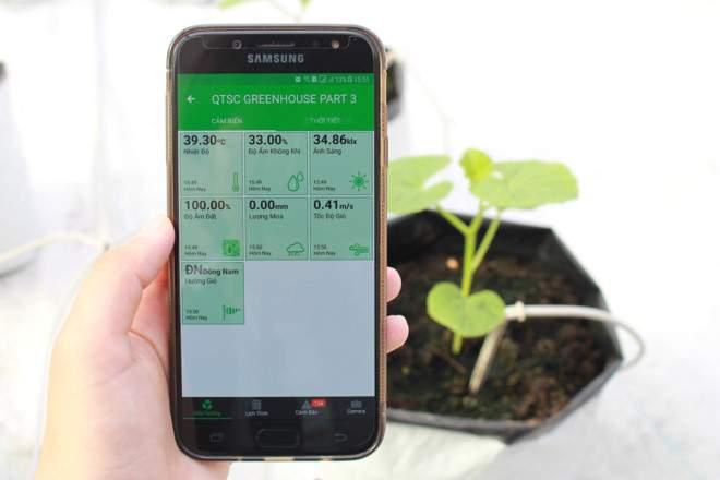 Dùng phần mềm công nghệ để xuống giống và thu hoạch rau - ảnh 3