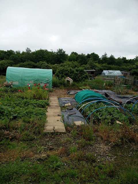 Gostwick allotments, Orton Brimbles