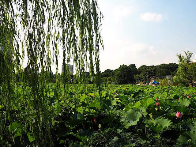 Shinobazu Pond, Ueno Park, Tokyo, Japan