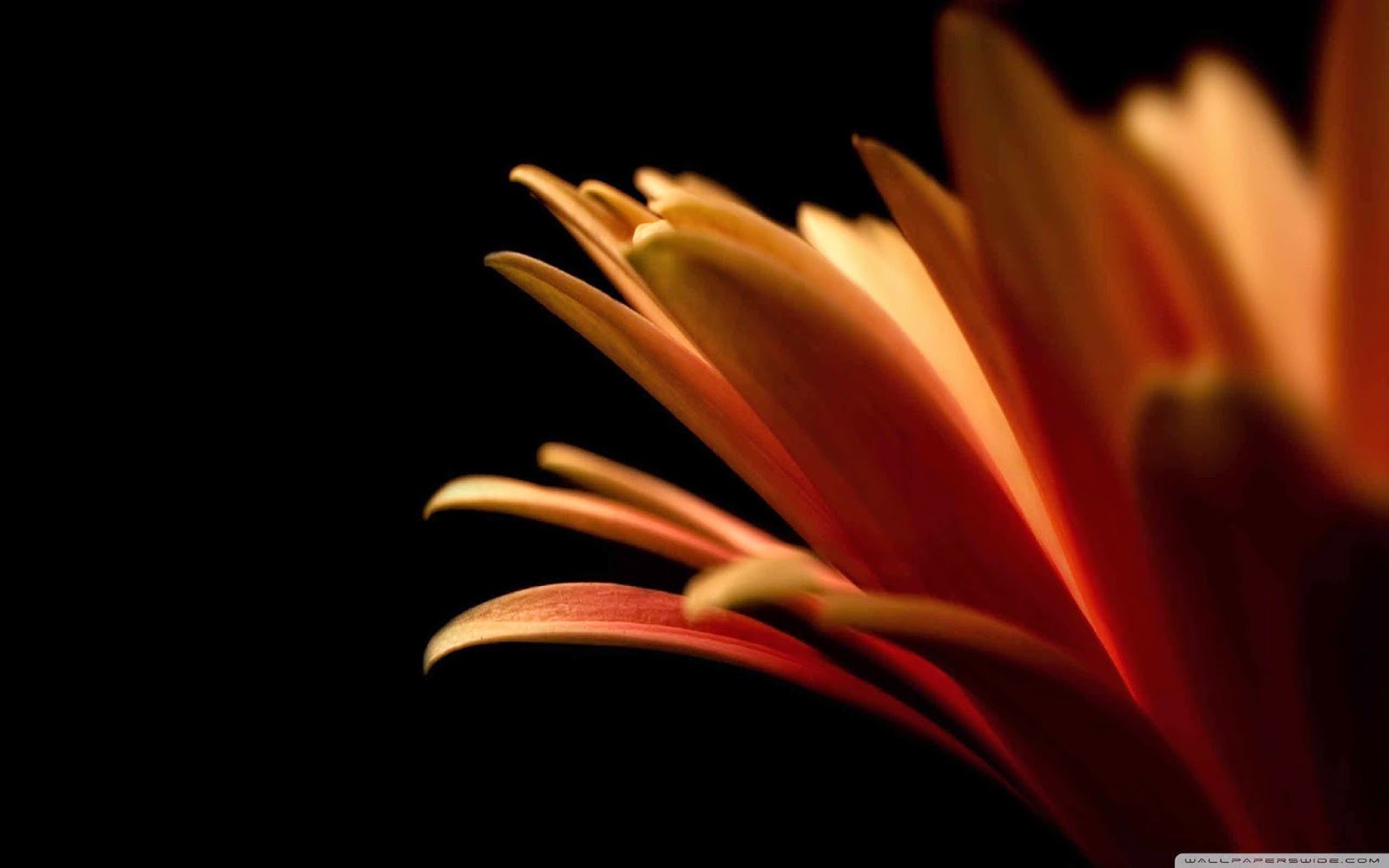 contrast flower wallpaper