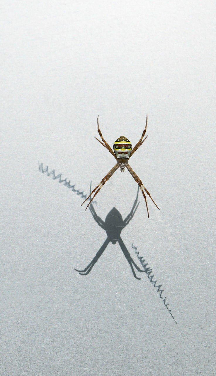 Spider reflection on the wall.