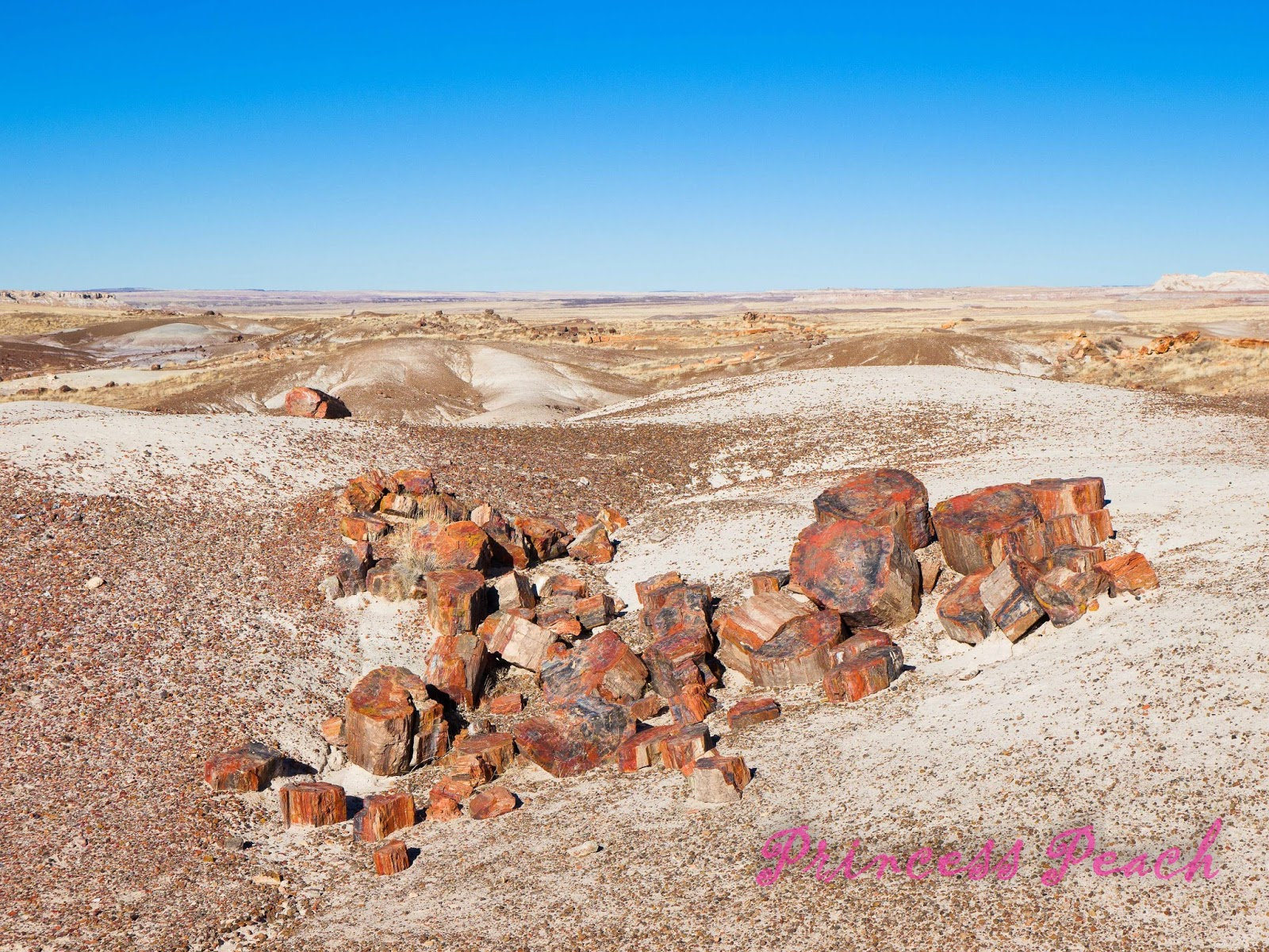 Petrified-Forest-National-Park-石化森林國家公園-Petrified-wood