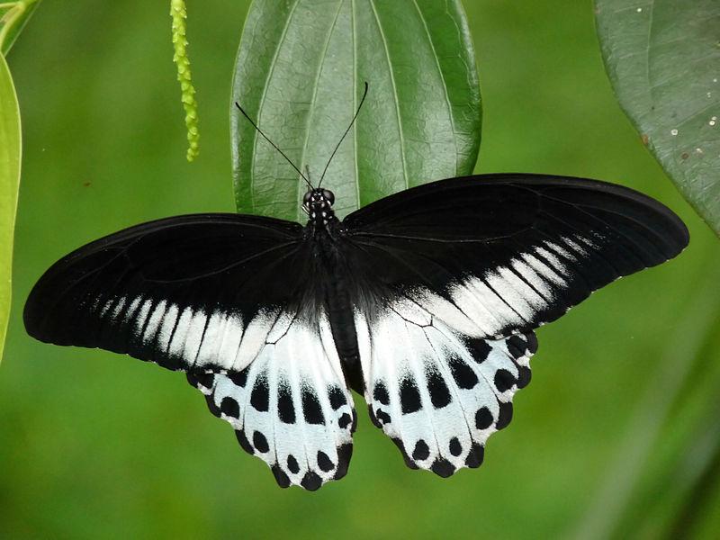 Butterflies: Beautifying Mumbai!