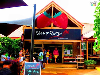 Sunny ridge strawberry farm tempat menarik di melbourne