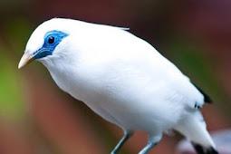 Ini Maksudnya, Nabi Muhammad Berkata Salah Satu Ciri Penghuni Surga Adalah Berhati Seperti Burung