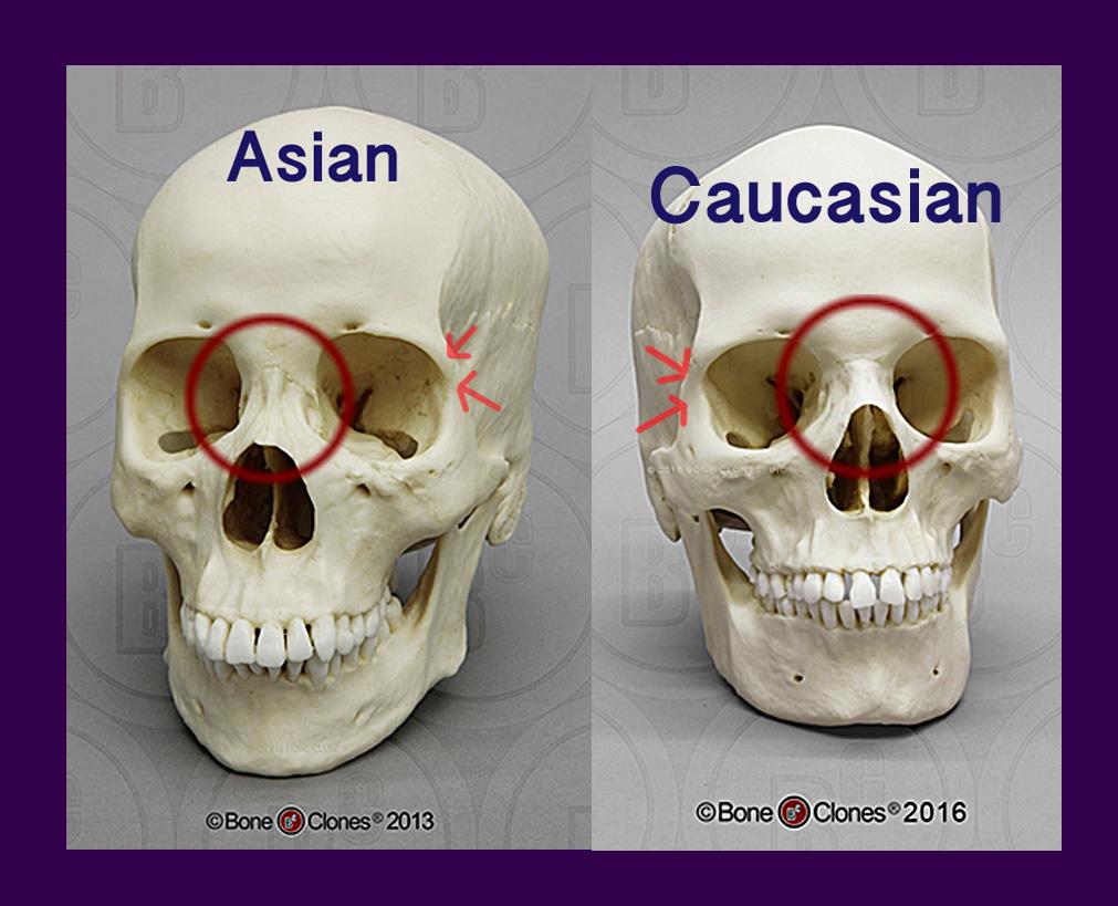 La differenza tra gli occhi asiatici e caucasici-5777