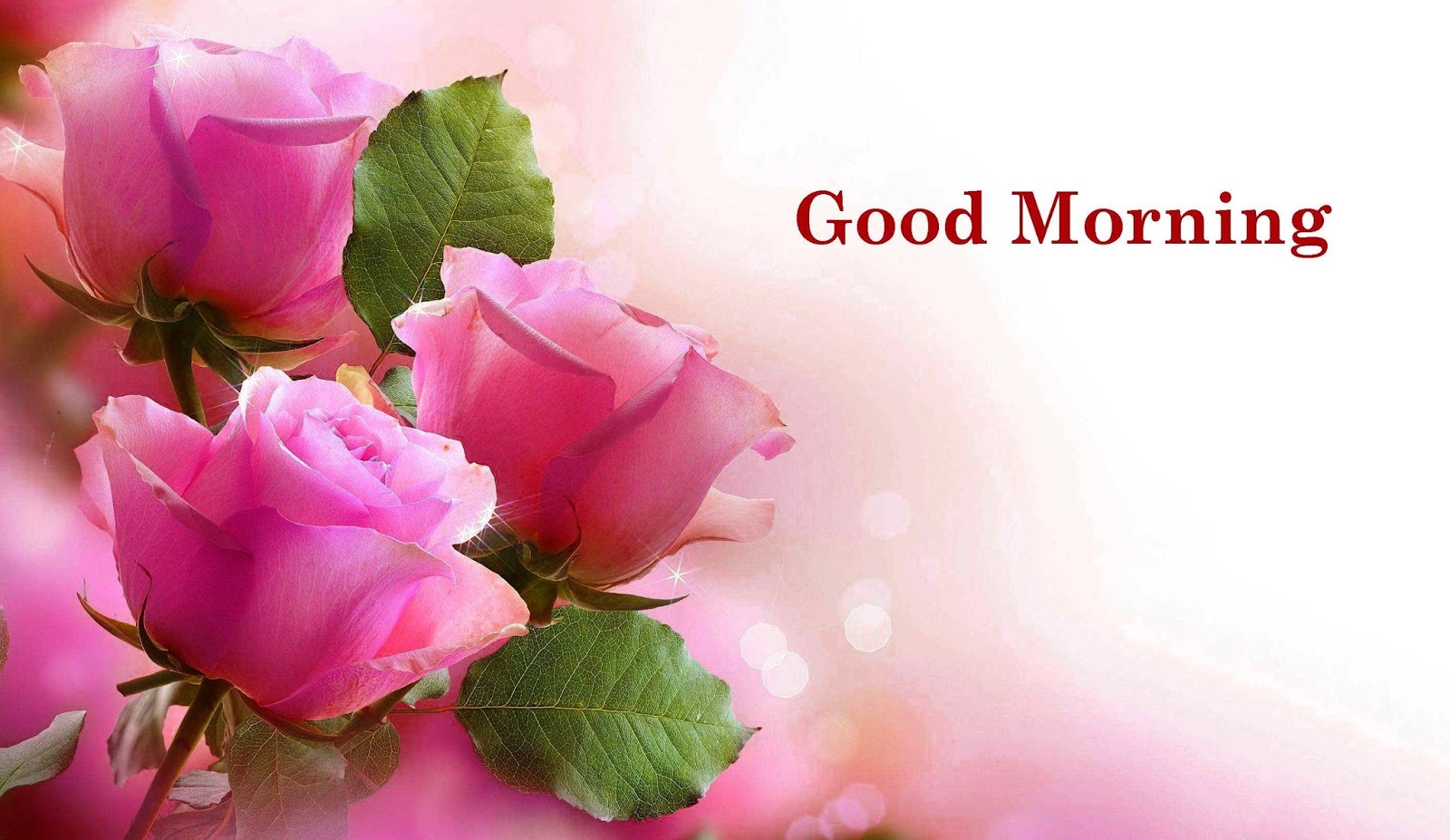 good morning hd rose flower images with messages photos pictures