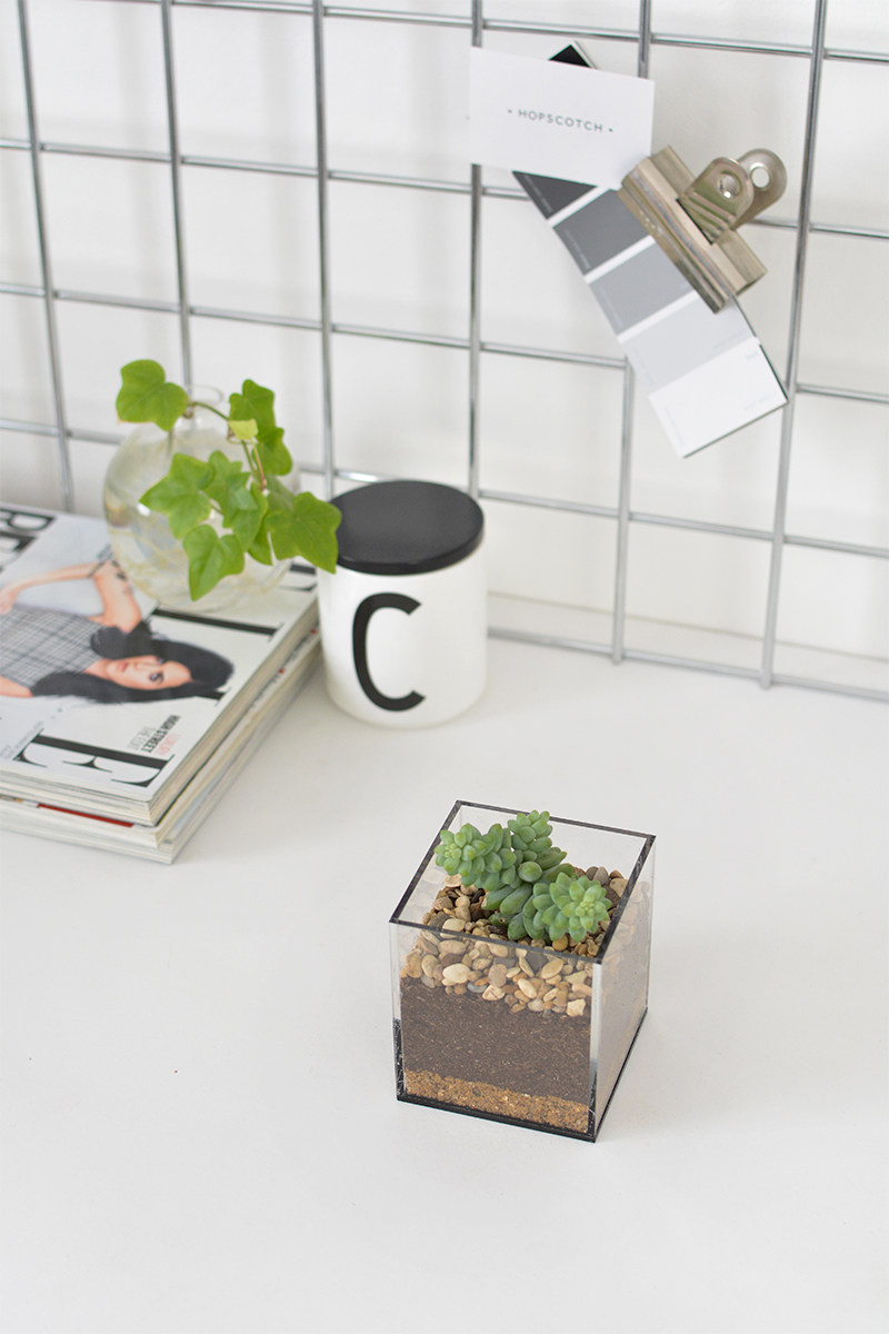 mini desk terrarium how to