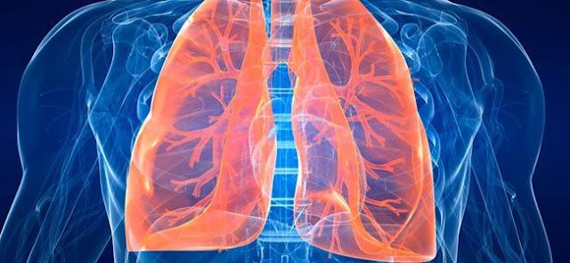 Los pulmones tienen la capacidad de producir sangre