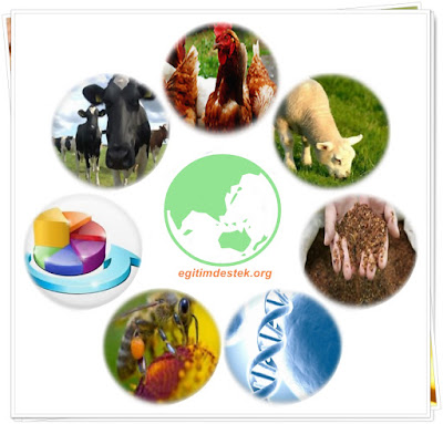 Zootekni Bölümü Geniş Tanıtımı