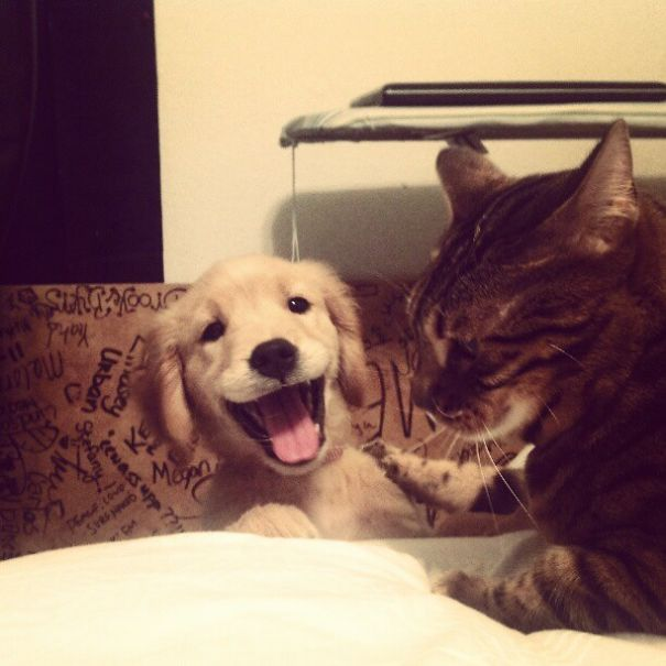 Funny animals of the week - 21 July 2017, funny animal images, best cute animal pictures
