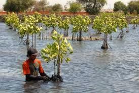 Konservasi Sumber Daya Alam Hayati dan Ekosistem