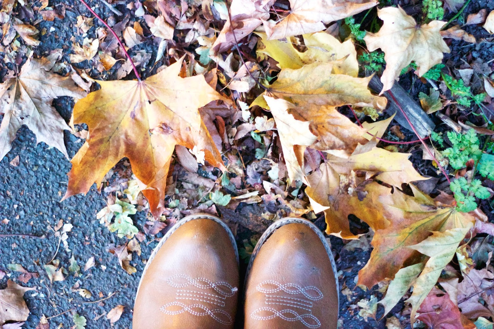Leaves, Boots, Asda George Boots, Autumn, Katie Writes Blog, Katie Writes,
