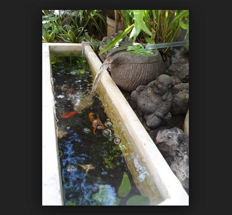 Membuat Kolam Ikan Hias