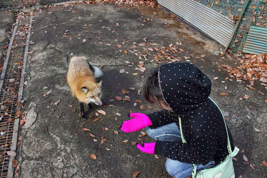 zao fox village japan adorable photos-3