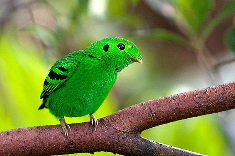 Amazing World & Fun: Beautiful Colorful Birds - Nature - photo#36