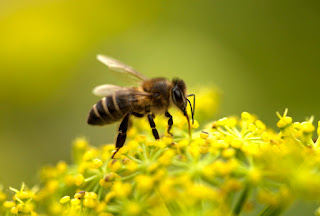 """Jugando a ser Dios es un audiovisual donde el apicultor y criador de abejas reinas Alejandro García  nos explica la importancia de los insectos para la polinización de las flores. Además nos explica los daños catastróficos que la agricultura de los herbicidas y los monocultivos le ha producido a nuestro mundo.   Alejandro considera que las grandes compañías de semillas están poniendo al planeta en un gran riesgo """"jugando a ser Dios"""" alterando genéticamente las plantas con los transgénicos y rociando el planeta con herbicidas e insecticidas.   Avisa también de los grandes cambios climáticos que la deforestación para la agricultura de monocultivos está produciendo en nuestro planeta y sus efectos, como por ejemplo las recientes inundaciones en Argentina provocadas por la deforestación de la Amazonia brasileña.   Este reconocido agricultor argentino cree que la única solución que tenemos es volver a respetar a la naturaleza, la vida y el medio ambiente."""