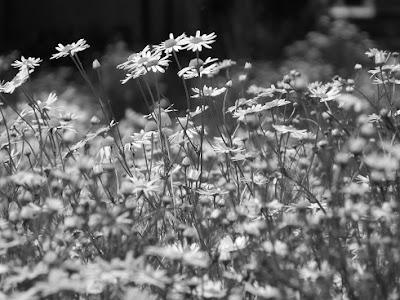 przyroda w czerwcu, slow life, blog