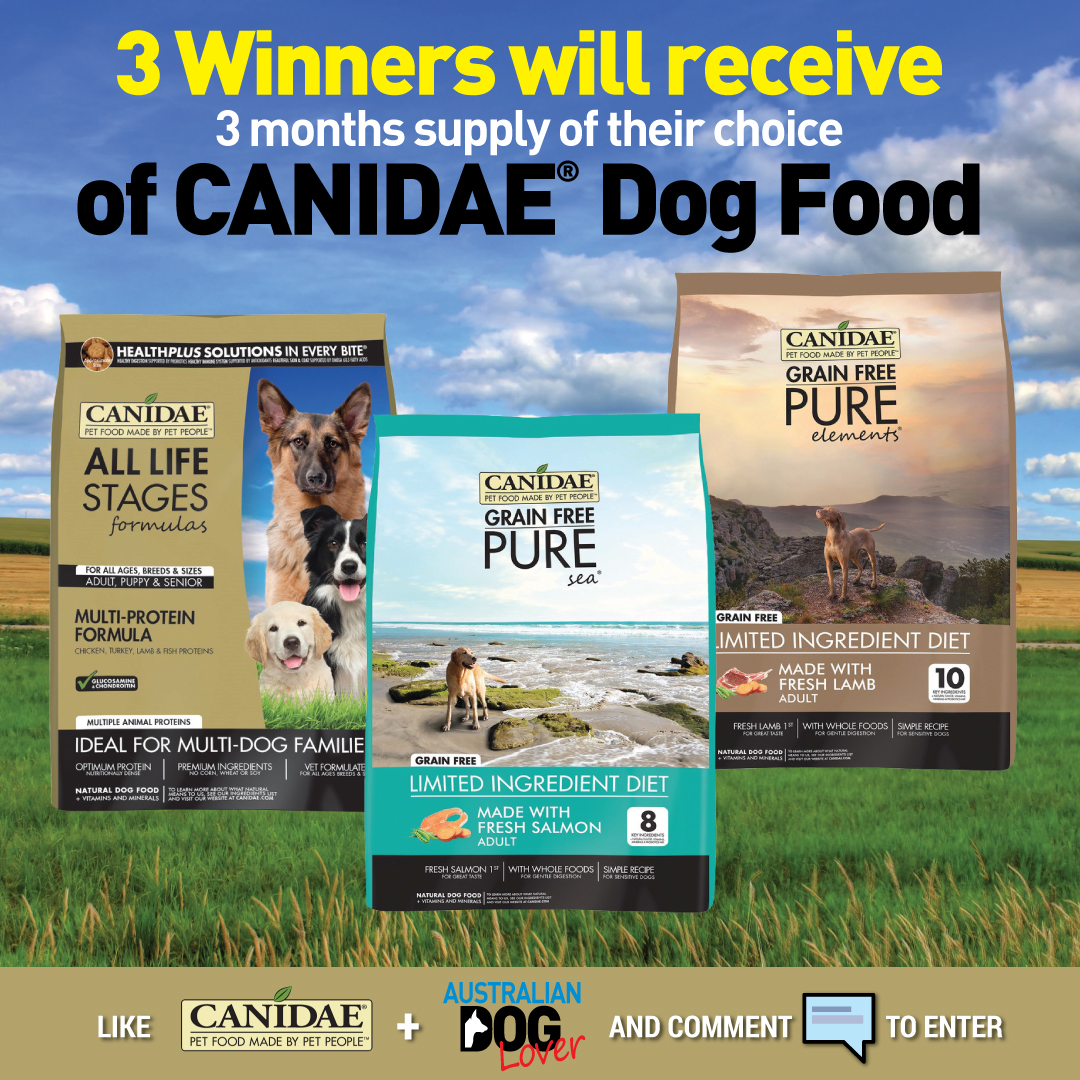 Large bags of CANIDAE dog food All Life Stages, Pure Salmon and Pure Lamb varieties