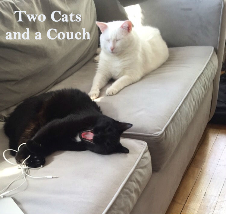 TWO CATS AND A COUCH