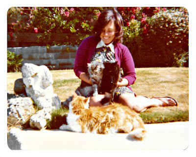 A big pile of cats at 1776 Sweetwood Drive in Broadmoor, California in the late 1970's.