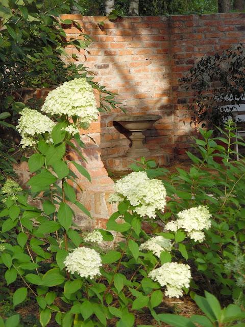 mur z cegły rozbiórkowej i kwitnąca hortensja