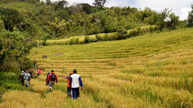 Latta Pitu BPS Kabupaten Pinrang