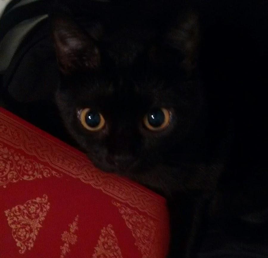 viajar-con-animales-hoteles-admiten-gatos