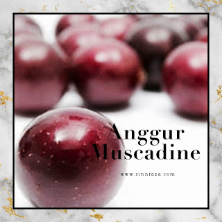 anggur muscadine vivix