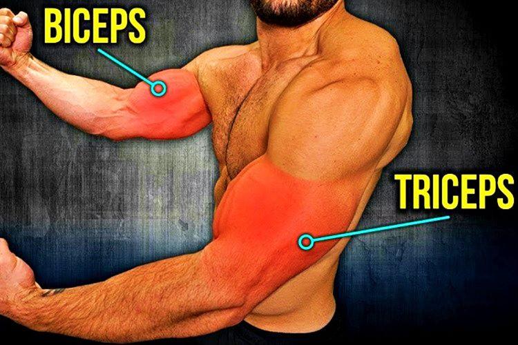 Kol kaslarını geliştirmek için, evvela kolda bulunan Triseps ve Biceps kaslarını iyi bilmek gerekir.