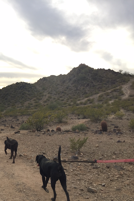 Phoenix hiking with dogs
