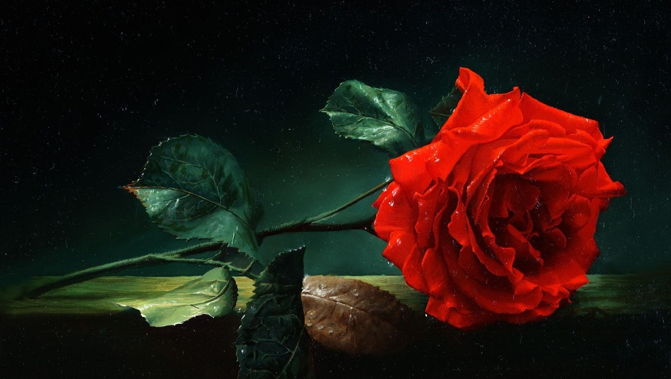 A Single Rose Wallpapers And Images: Flower HD Wallpapers, Images