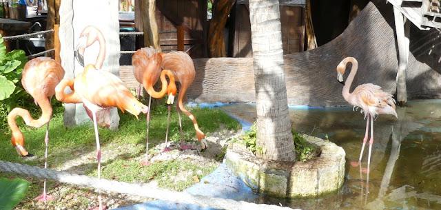 Kreuzfahrthafen Costa Maya - Flamingos