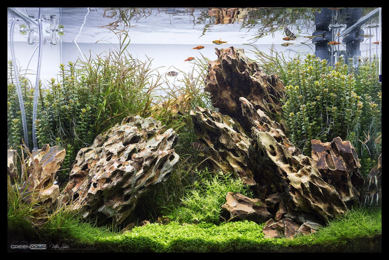 Một hồ thủy sinh có cây vẩy ốc ấn độ ở 2 bên hậu cảnh