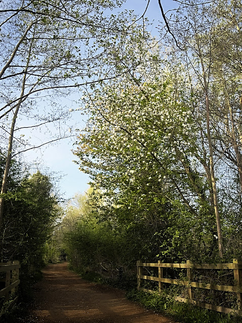 View along path with tall apple tree overshadowing the path
