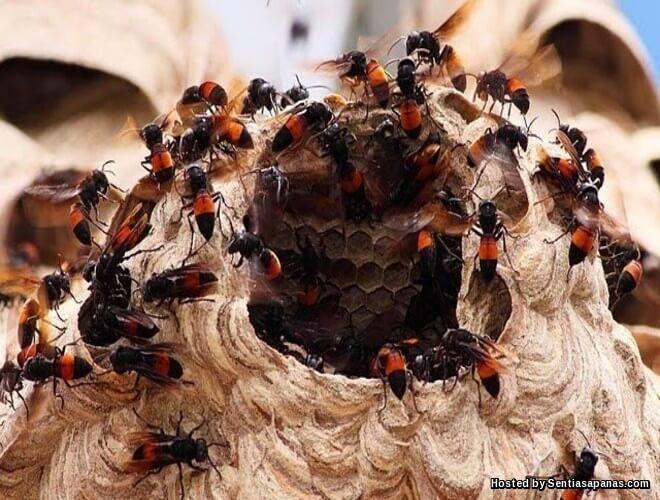 10 Serangga Paling Berbahaya Di Dunia