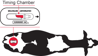 """contoh peletakan contoh Heat detector timing chamber """"KAMAR"""" pada ternak sapi"""