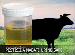 PESTISIDA NABATI Urine Sapi (Pengendalian Bercak daun dan Blas)