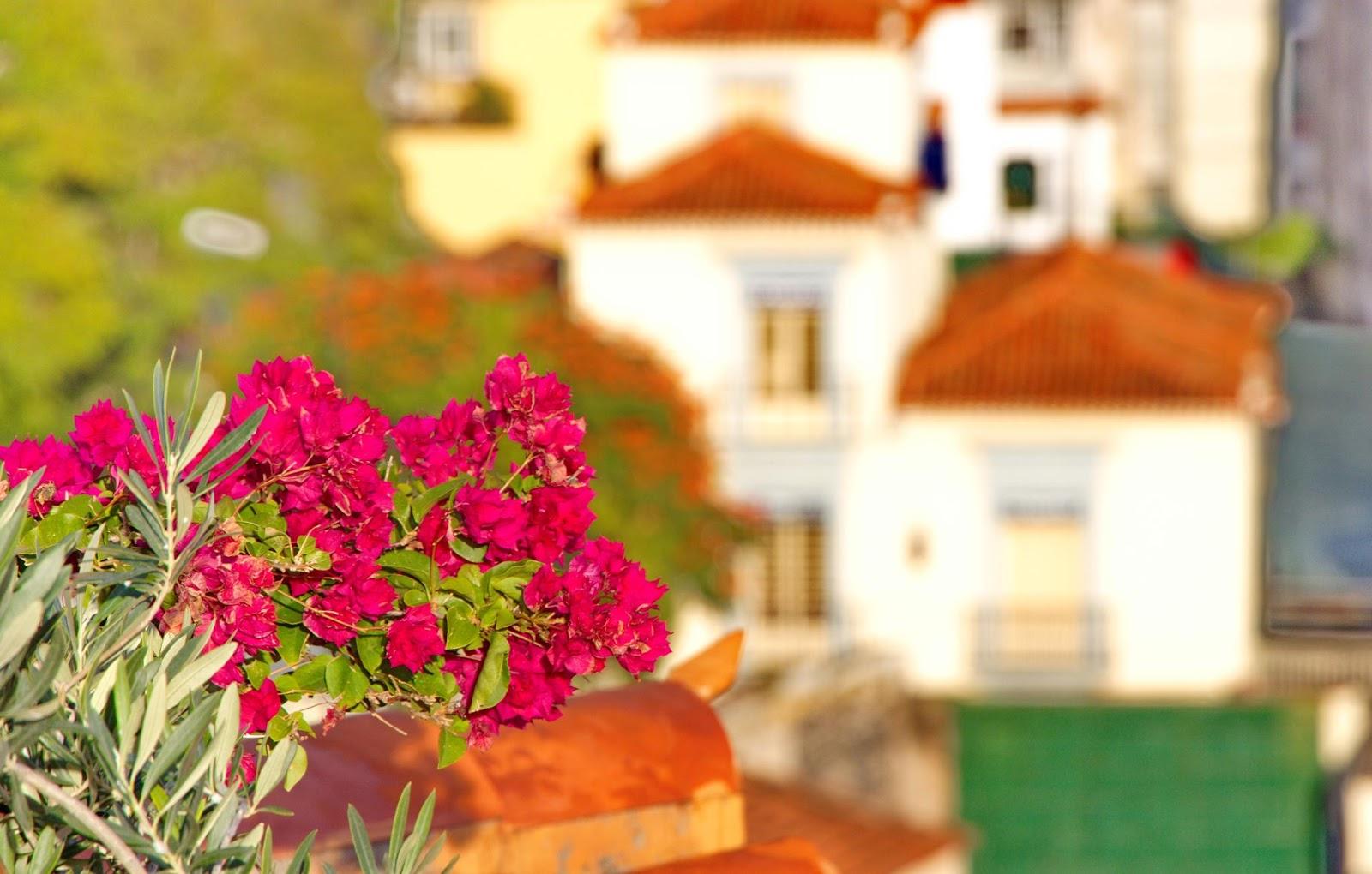 flores no telhado