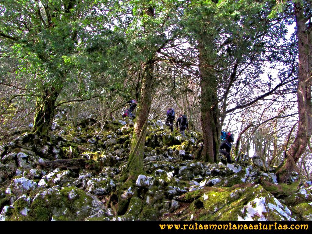 Ruta Montaña al Pienzu: Atravesando bosque de texos