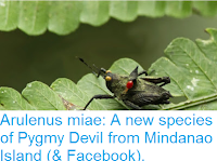http://sciencythoughts.blogspot.co.uk/2016/01/arulenus-miae-new-species-of-pygmy.html