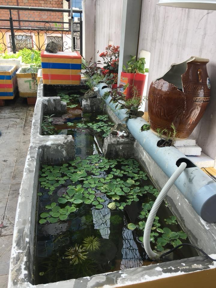 Hồ nuôi cá bằng thùng xốp của Phan Minh Tiến