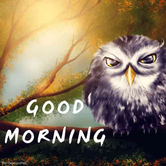 good morning wallpaper with owl