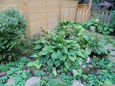 Riverdale Backyard Fall Cleanup Before by Paul Jung Gardening Services--a Toronto Organic Gardening Company