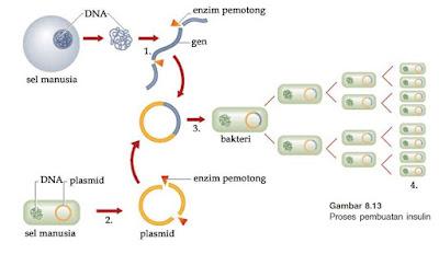 produksi insulin dengan teknik plasmid