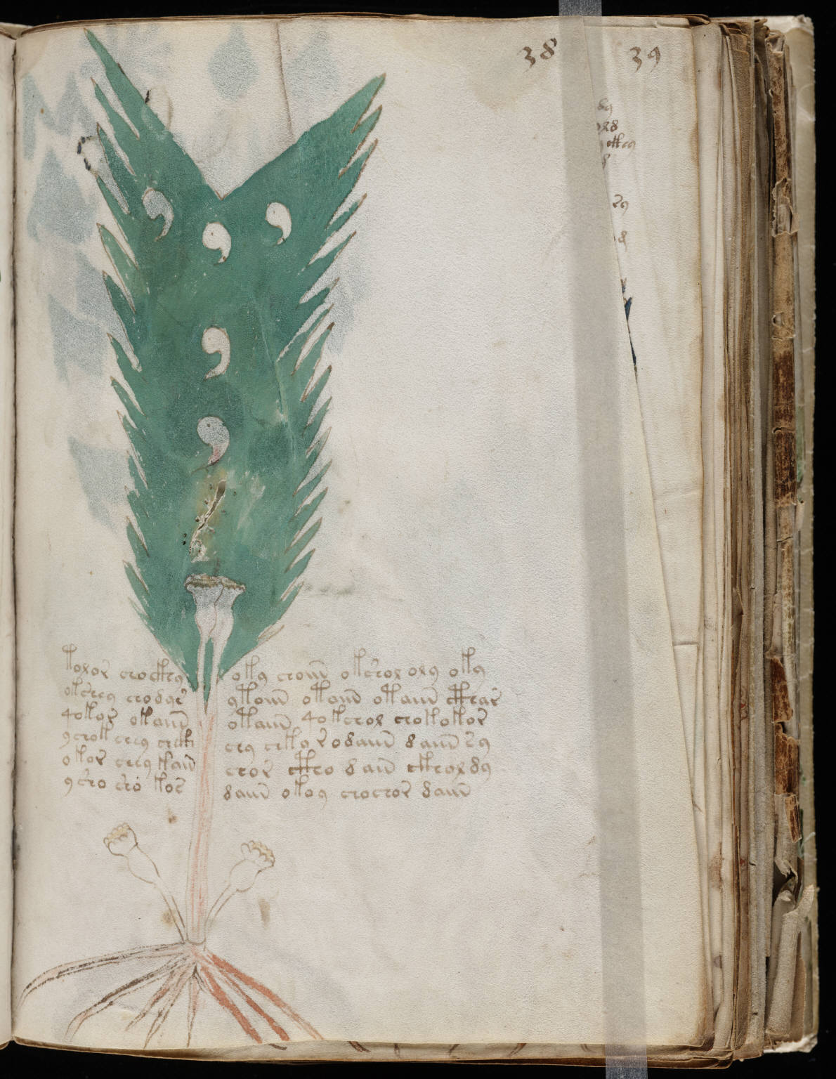 manuscrito073